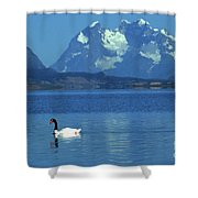 Black Necked Swan On Last Hope Sound Chile Shower Curtain
