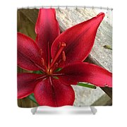 Black Center Day Lily  Shower Curtain