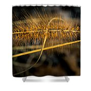 Black Pennisetum In Setting Sun Shower Curtain