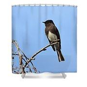 Black Phoebe 2 Shower Curtain