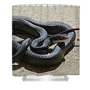 Black Racer Shower Curtain
