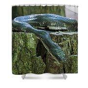 Black Rat Snake Shower Curtain