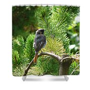 Black Redstart Shower Curtain