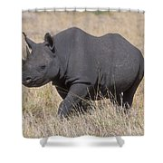 Black Rhino On The Masai Mara Shower Curtain