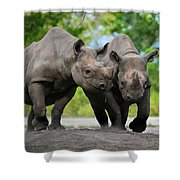 Black Rhinoceroses Shower Curtain