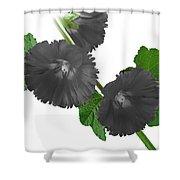 Black Roses Shower Curtain