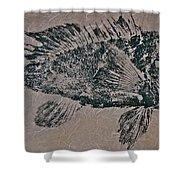 Black Sea Bass - Grouper - Rockfish Shower Curtain