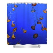 Black Sea Nettle Jellyfish - Monterey Shower Curtain
