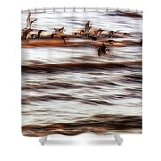 Black Skimmers Of Long Beach - Mississippi - Birds Shower Curtain