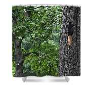 Black Squirrel With Blond Tail  Shower Curtain