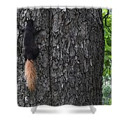 Black Squirrel With Blond Tail Two  Shower Curtain