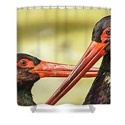 Black Storks Jerez De La Frontera Spain Shower Curtain