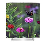 Black Swallowtail Butterfly In August  Shower Curtain