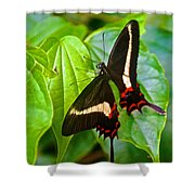 Black Swallowtail Butterfly In Iguazu Falls National Park-brazil  Shower Curtain