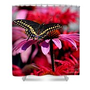 Black Swallowtail Butterfly On Coneflower Square Shower Curtain