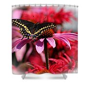 Black Swallowtail Butterfly With Coneflower And Monarda Shower Curtain
