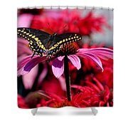 Black Swallowtail Butterfly With Coneflowers And Bee Balm Shower Curtain