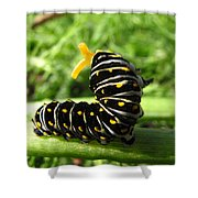 Black Swallowtail Caterpillar Shower Curtain