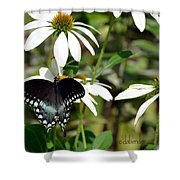 Black Swallowtail Shower Curtain