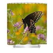 Black Swallowtail Shower Curtain by Robert Frederick