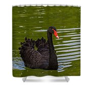 Black Swan II Shower Curtain