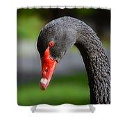 Black Swan Portrait Shower Curtain