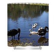 Black Swan's Shower Curtain