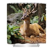 Black-tailed Deer Shower Curtain