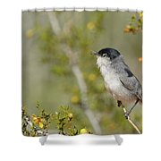 Black-tailed Gnatcatcher Shower Curtain