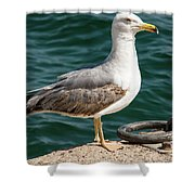 Black Tailed Gull On Dock Shower Curtain