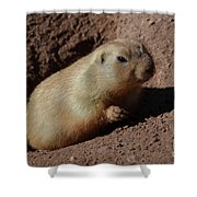 Black Tailed Prairie Dog Climbing Out Of A Hole Shower Curtain
