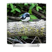 Black-throated Blue Warbler Shower Curtain