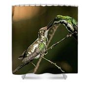 Black-throated Mango With Her Baby Hummingbird. Shower Curtain