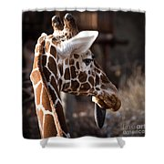 Black Tongue Of The Giraffe Shower Curtain