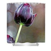 Black Tulip Shower Curtain