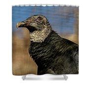 Black Vulture 1 Shower Curtain