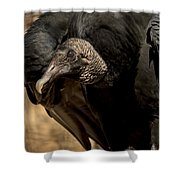 Black Vulture 2 Shower Curtain