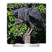 Black Vulture On A Fence Post Shower Curtain