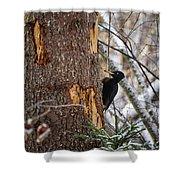 Black Woodpecker Peek Shower Curtain