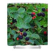 Blackberries 1 Shower Curtain