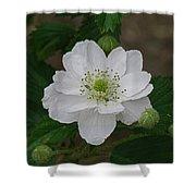 Blackberry Blossom Shower Curtain