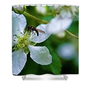 Blackberry Bzzzzz Shower Curtain