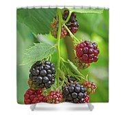 Blackberry Shower Curtain