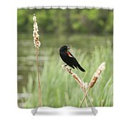 Blackbird Fly Shower Curtain
