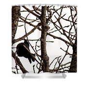 Blackbird In A Tree Shower Curtain