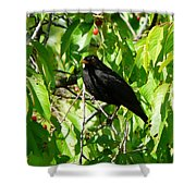 Blackbird In The Cherry Tree Shower Curtain