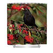 Blackbird Red Berries Shower Curtain