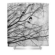 Blackened Birds Shower Curtain