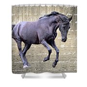 Blackhorse Poetry Shower Curtain