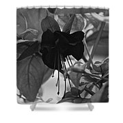 Blackie Fushia Shower Curtain